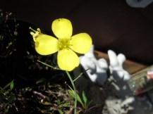 Vier runde, zarte Blütenblätter