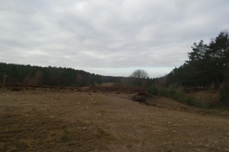 Sandige Flächen und Kiefernwälder im Hintergrund - der Himmel ist grau