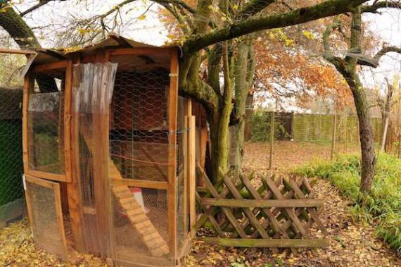 It should not always be very expensive: The romantic type of the henhouse