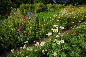 Naturgarten anlegen   so geht&39;s   Garten Mix