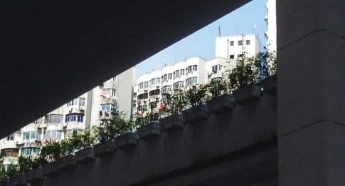 Shanghai -1 (0)