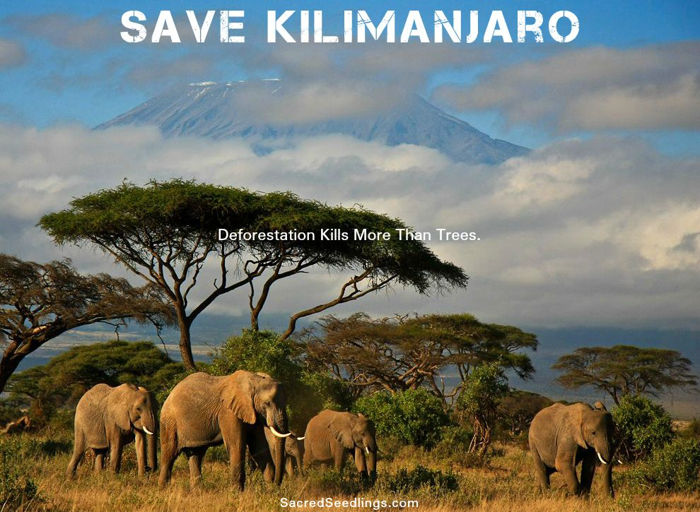 Save Kilimanjaro ecosystem