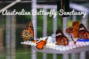 Butterflies at the Australian Butterfly Sanctuary