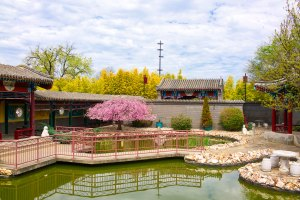 Water Garden, Golden Dragon Museum, Bendigo Gary Lum