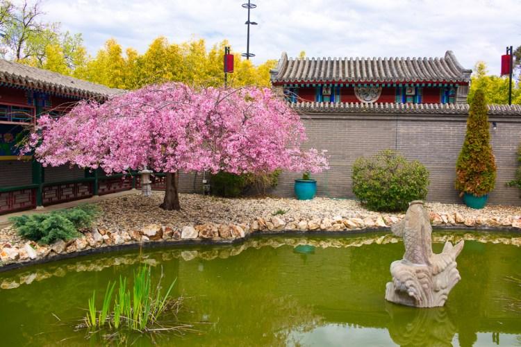 Water Garden, Golden Dragon Museum, Bendigo Gary Lum