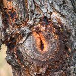 Tree knot Gary Lum