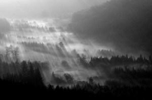 mist19