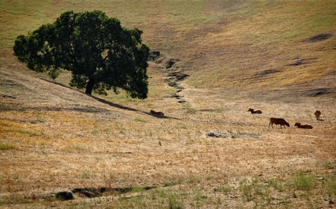 Tree on colorful bare hill with cows