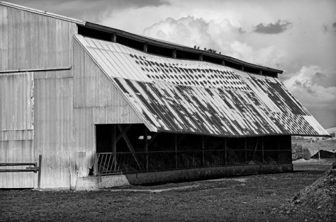 Barn with pigeons after a storm