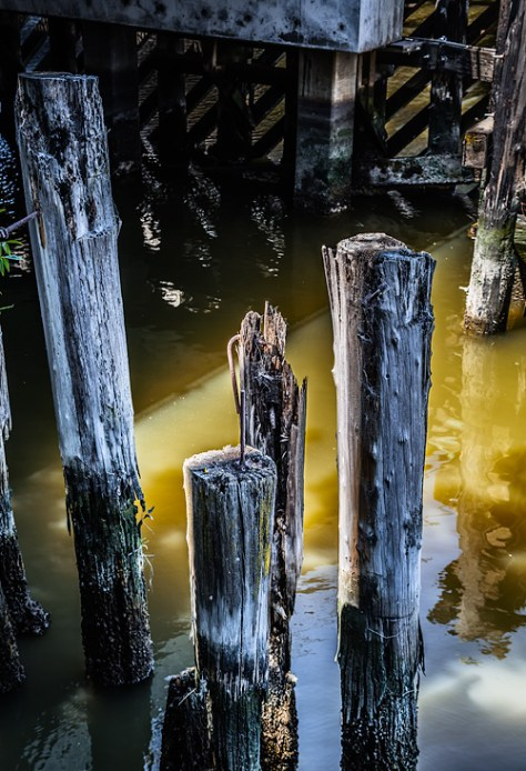 Petaluma river pilings abstract