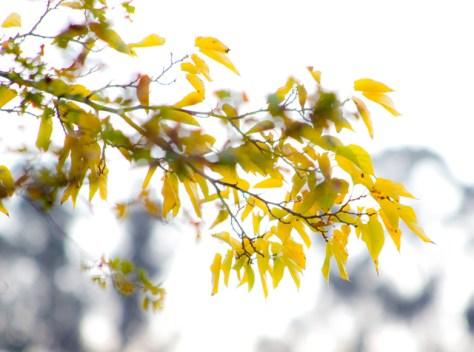Ethereal fall foliage