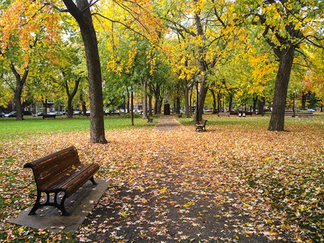 Parc Molson in autumn