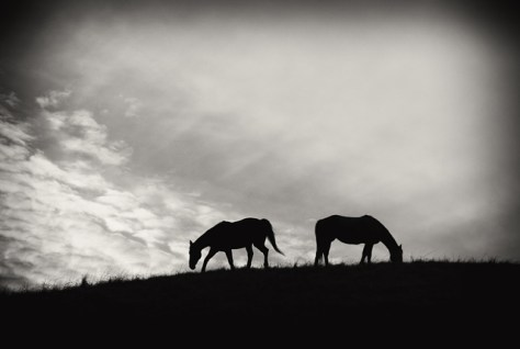 Horse silhouettes