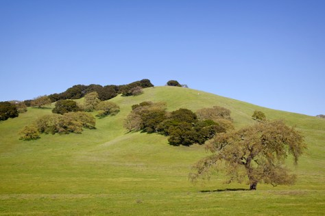 A hillside in Sonoma County