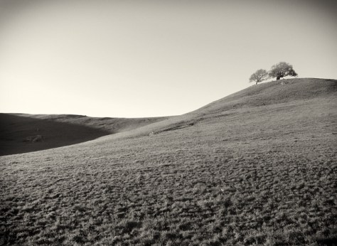 wide shot of oaks on a green hill in black and white