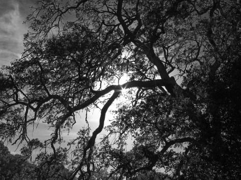 End of summer oak