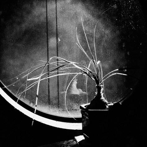 Winter window scene in black and white