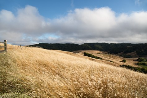 Sonoma County hills in early summer