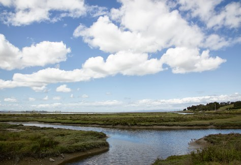 Bayfront Park wetlands and puffy cloud sky