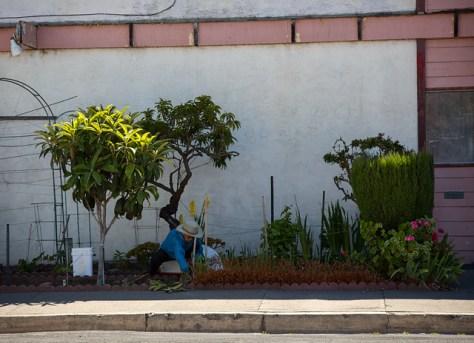 Woman working her sidewalk garden patch