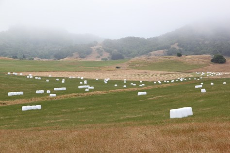 Wrapped silage in Sonoma County field