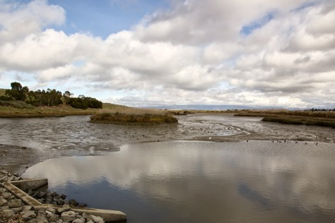 Tidal pond at low tide