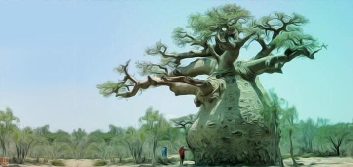 Baoba