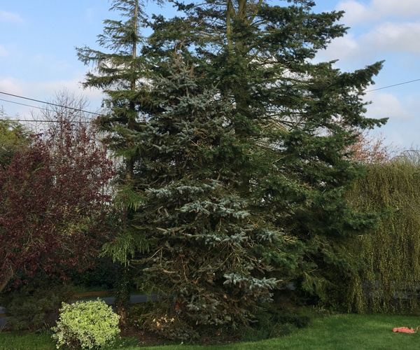 Gascoigne Garden & Tree Services - Tree Cutting