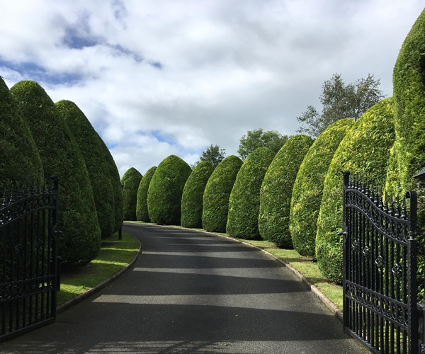 Gascoigne Garden & Tree Services - Hedge Trimming