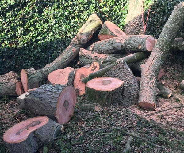 Gascoigne Garden & Tree Services -