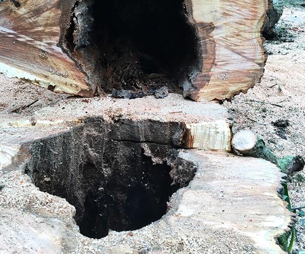 Gascoigne Garden & Tree Services - Stump Grinding