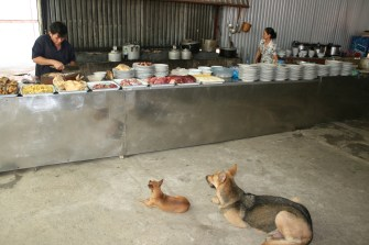 Vietnamese dogs