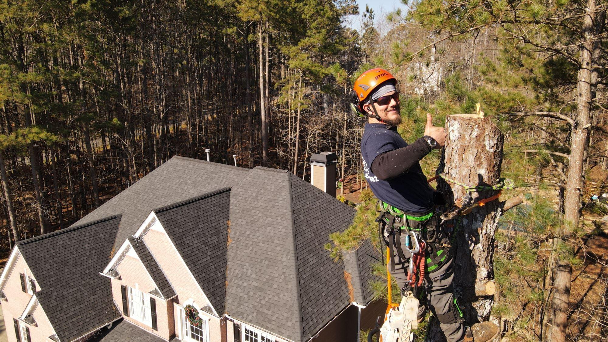 Tree Removal North GA