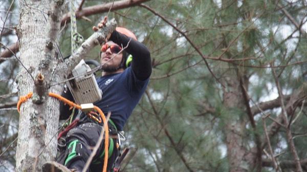 Tree Removal in Canton GA