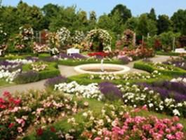 Europa-Rosarium in Sangerhausen - die weltgrößte Rosensammlung