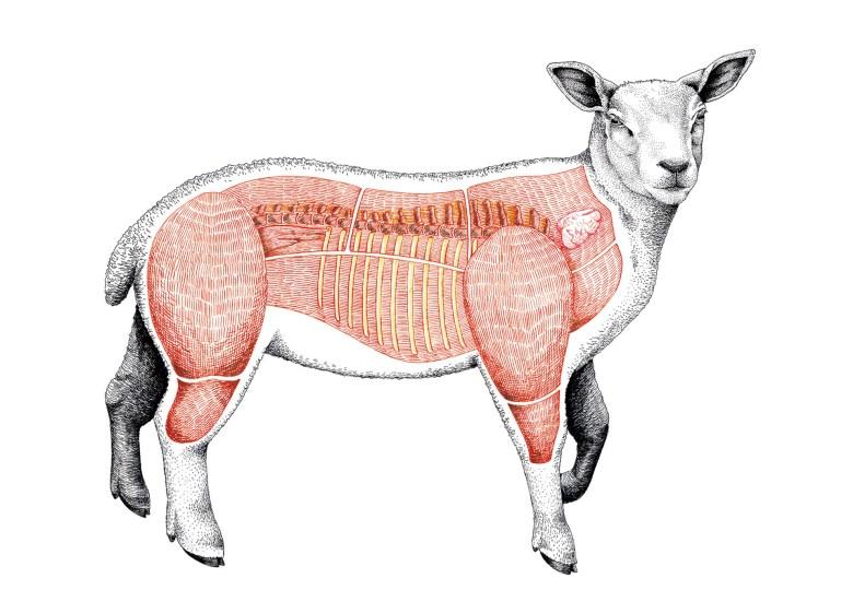 lamb_map_gastondelapoyade