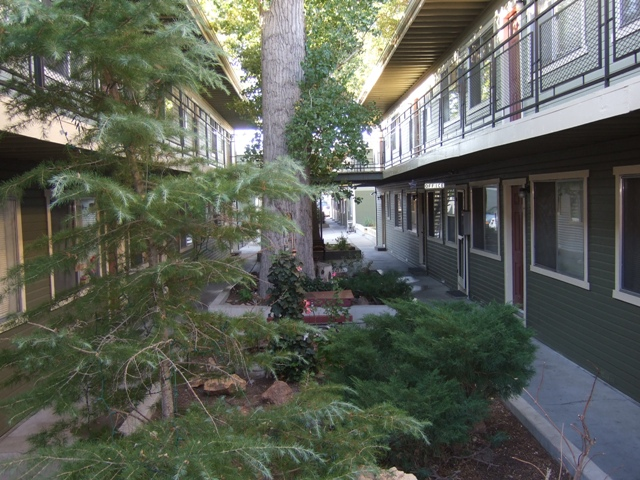 Linden courtyard with trees