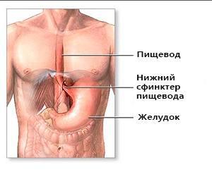 Желудочный клапан не закрывается лечение. Клапан в желудке не закрывается