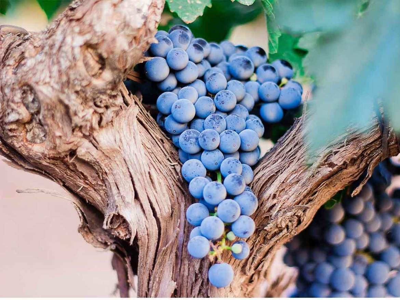 Mejores vinos de Madrid