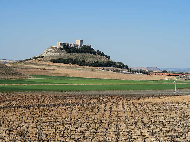 Bodega Pago de Carraovejas Castillo Peñafiel Valladolid