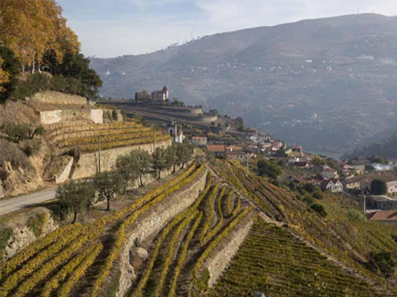 Socalcos da Carrís DO Duero vinos de Oporto