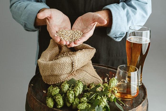 Cerveza. Cebada y lúpulo