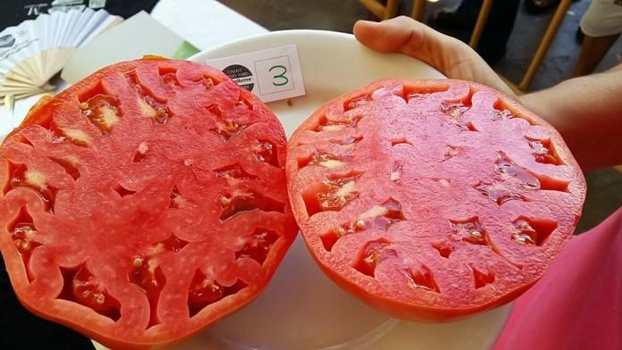 tomate huevo de toro