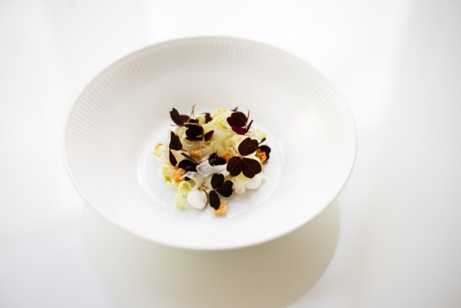 Saltet kammusling, yoghurt, croutons, syltet blomkål - Foto: Rasmus Flindt Pedersen