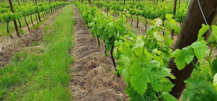 Vinmark i Portugal