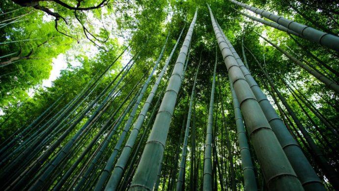 El Bambú