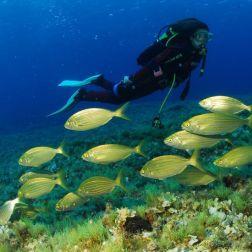 El secreto de las cristalinas aguas de Formentera - Gastronomía y Moda