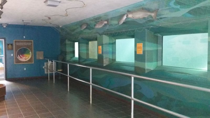 Fish Ladder Room