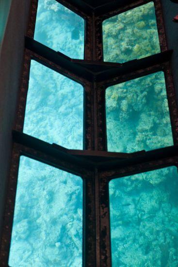 Glass-Bottom Boat