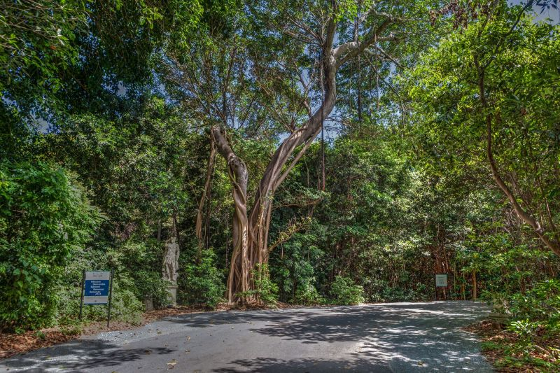 Driveway to Vizcaya Parking Lot
